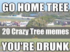 tree memes