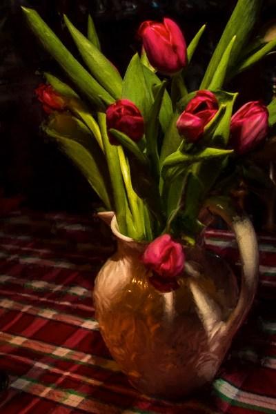 Christmas tulips 2