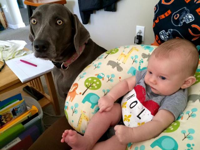 Curious Weims LOVE kids