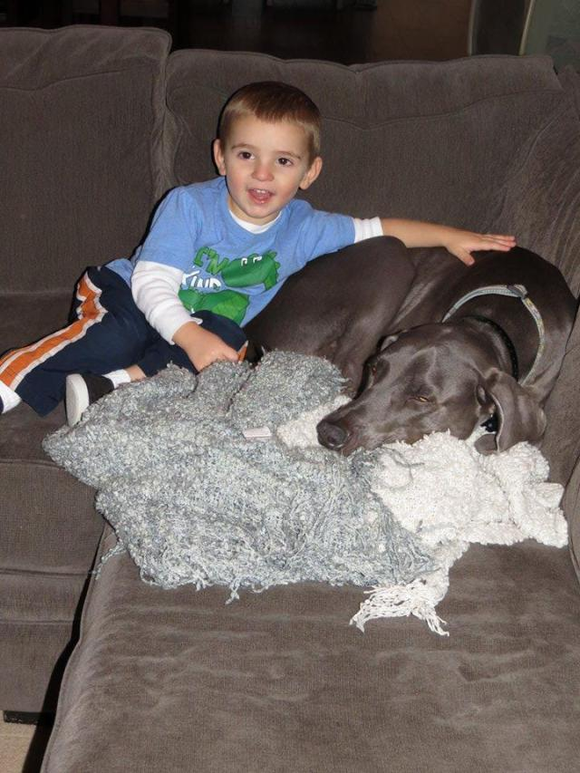 Curious Weims are great with kids!