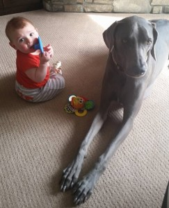 Weims and Kids 2