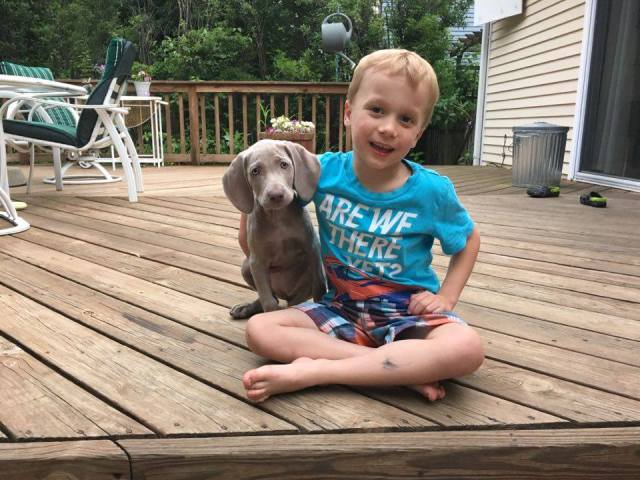 Weims LOVE Kids!