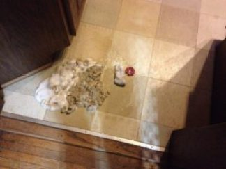 One of our dogs ate a baby sock (and apparently a hair bow, too)!