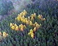 La esvástica en el bosque