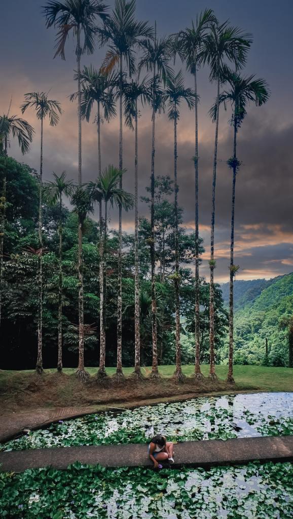 Martinique - Jardin de balata - mare carpe coi psd-min