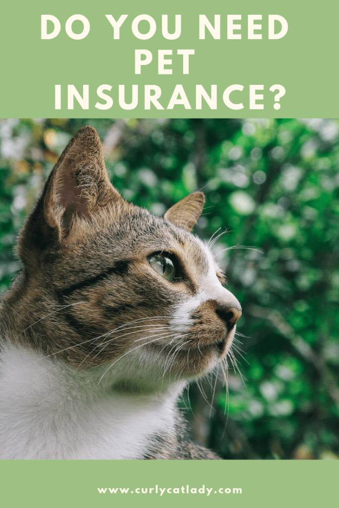 Do you need pet insurance?