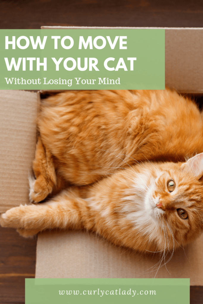 How to move with your cat without losing your mind
