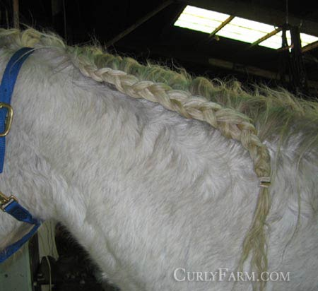Photo of french braided mane