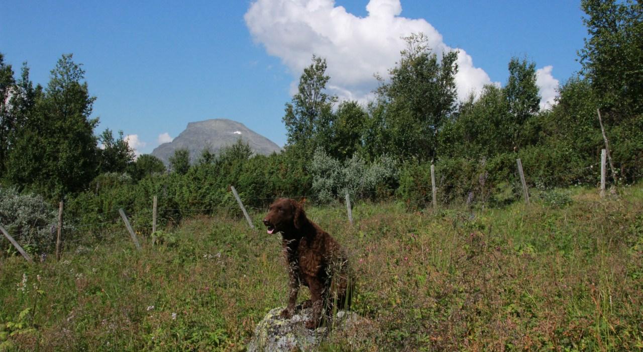 Hundeferie i Hemsedal 2014