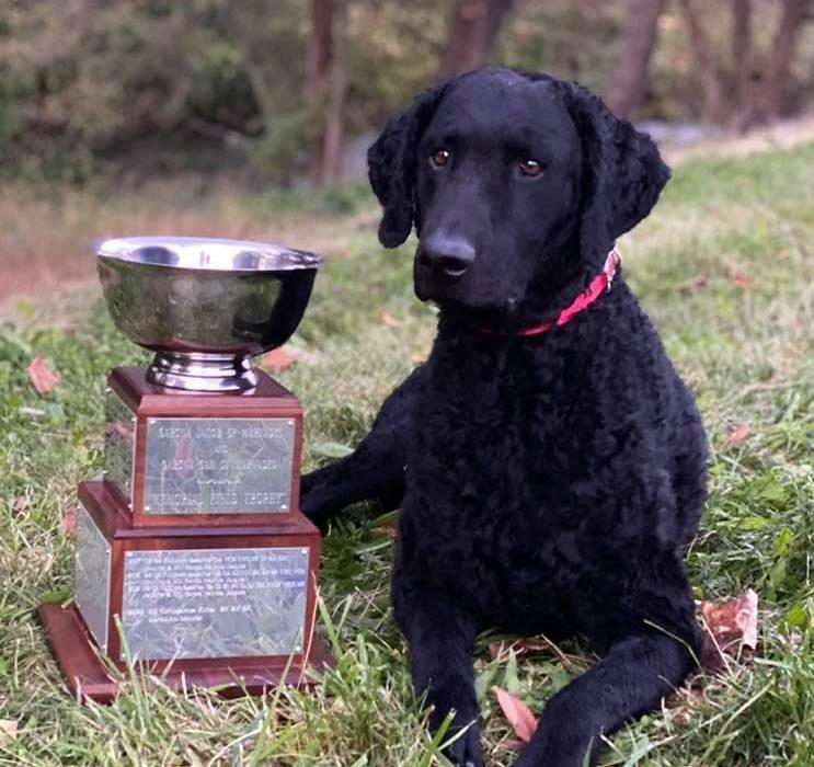 CCRCA  Field Trophy