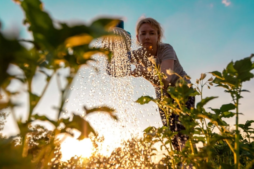 Blooming Farm Quotes Describing its Thrills and Splendor
