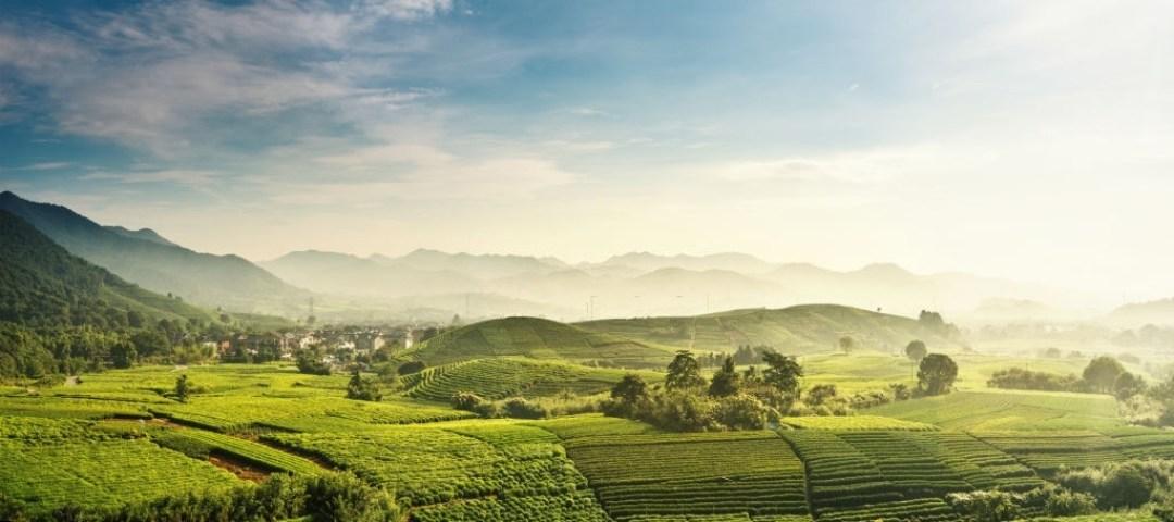 Lovely Landscape