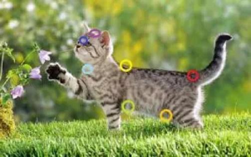 Chakras en Reiki para Gatos