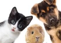 reiki para animales