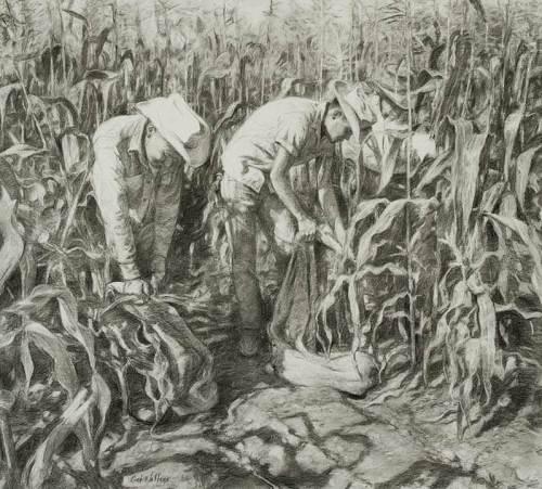 Navajo Harvest