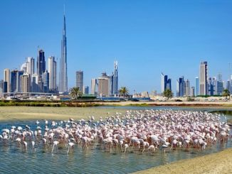Top Destinations to Visit in Dubai