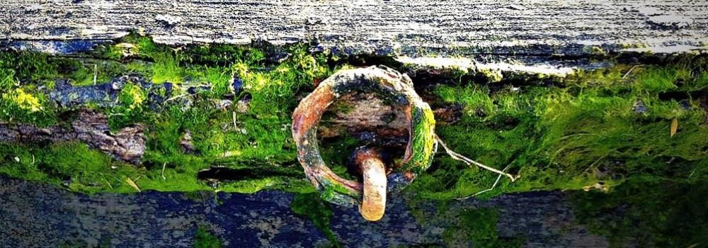 moss and aged wood at marina