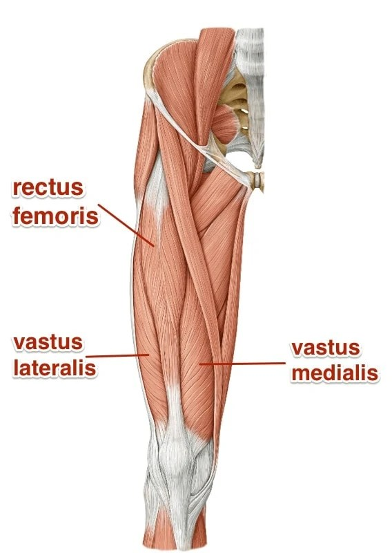 Quadriceps Learn Your Muscles Custom Pilates And Yoga