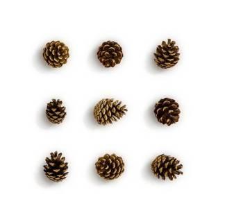 item-cover-pinecones-pack