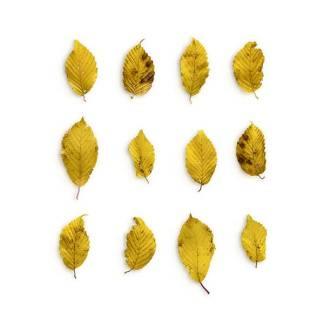 item-cover-hornbeam-1-leaves-pack