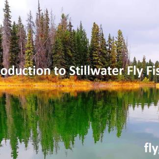 Introduction to Stillwater Fly Fishing