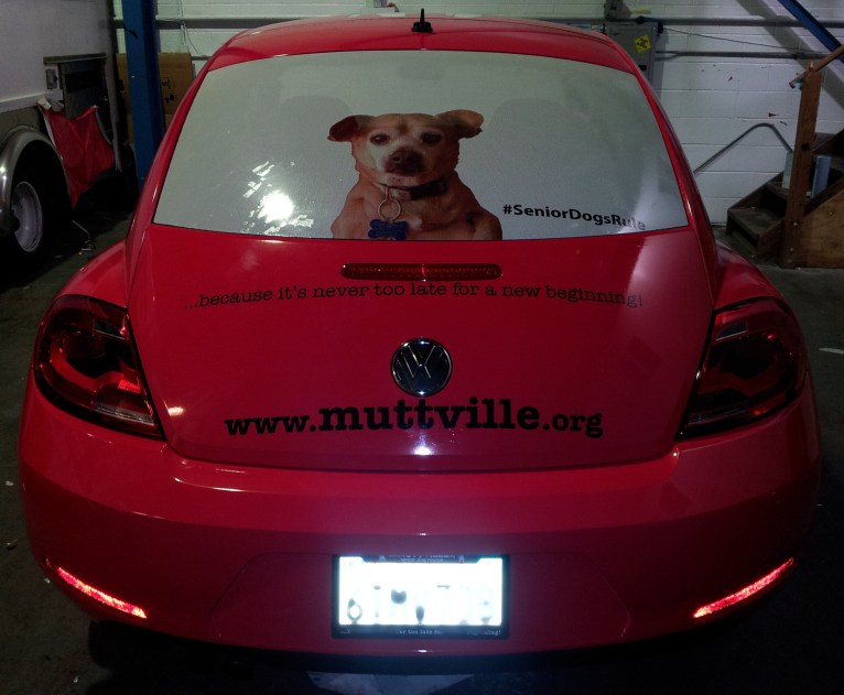 muttville car wrap-04