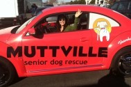muttville car wrap-07