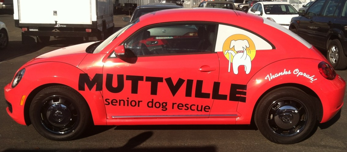 muttville car wrap-13
