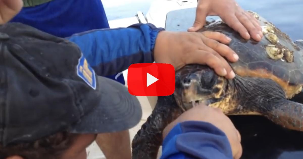 "VIDEO: Due pescatori siciliani salvano una tartaruga marina ""Caretta Caretta""."