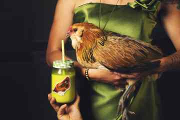 A woman in a green dress holds a chicken who is trying to drink from a mason jar...that has a sticker of the chicken on it.