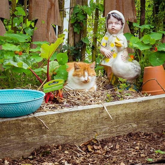 Die Rote Katze aus dem Rosa Haus