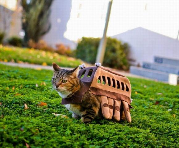 Cute Costumed Critters