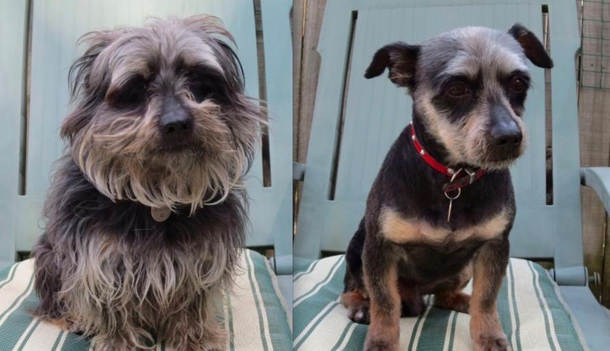These Pets Look Adorable In Their New Haircuts Cuteness