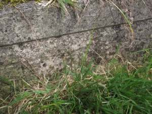 Foot of Beament grave