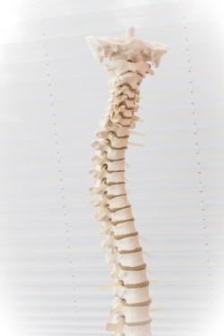 Spine - Chiropractic Services Newburyport