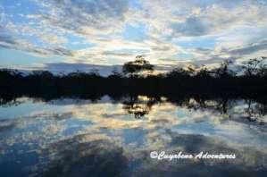 South America, Amazon, Rainforest