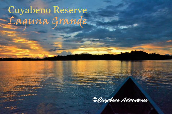 Laguna Grande is a perfect place to go swimming or to see the sunset and it´s one of the 14 lakes in Cuyabeno Reserve. Level of the water depends on the rains and on a dry season it´s possible that the lake dries out. Caimans, anacondas and piranhas habitat the Reserve, but it's safe to swim in this lake. Cuyabeno Reserve, Ecuador.