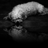 Mikey liegt auf dem Boden, es erscheint, als würde er sich auf einer Wasserfläche spiegeln