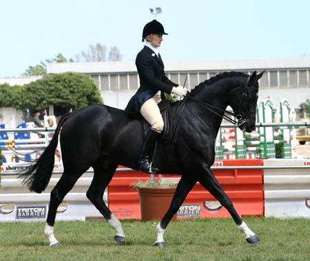 The Virtual Equestrian Garryowen Perpetual Trophy
