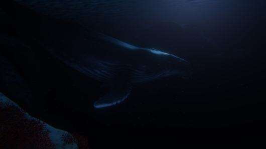 humpback-in-moonlight