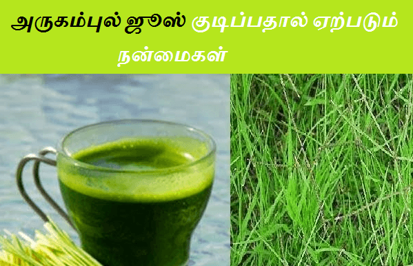arugampul juice benefits in tamil
