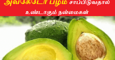 avocado fruit benefits in tamil