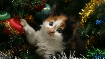 Les dangers de Noël pour votre animal: Trucs et Conseils