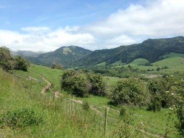 Cow pastures, cow trails.