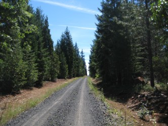 Old railroad grade road near Butte Falls.