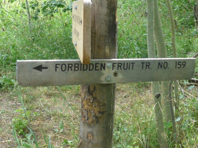 Forbidden Fruit Trail Ketchum