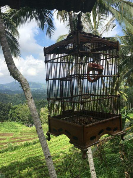 Lunch Spot on Bali