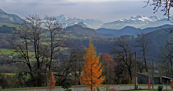 A tree and the Alps