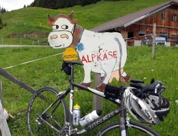 Homer Cow
