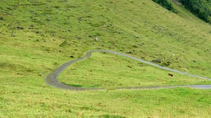A heart shaped road?